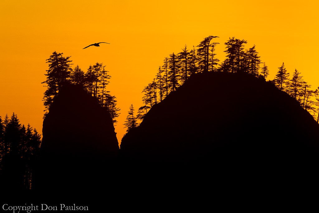 Golden sunset - La Push, James Island
