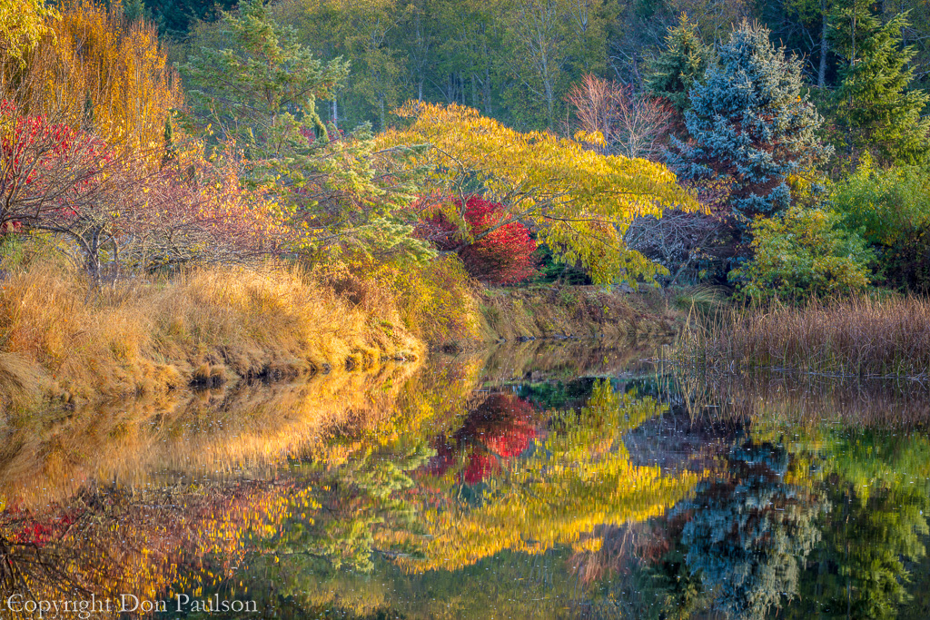 Fall color reflected in a tidal lagoon