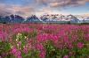Flowers, Alaska, Alsek River, Fairweather Range