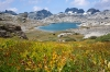 field of fall flowers, Nydiver Lake, Ansel Adams Wilderness, Inyo National Forest, California
