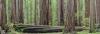 California, Humbodlt Redwoods State Park
