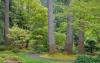 Garden Path #1