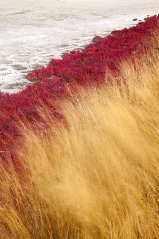 British Columbia, Kamloops, Red and yellow grasses
