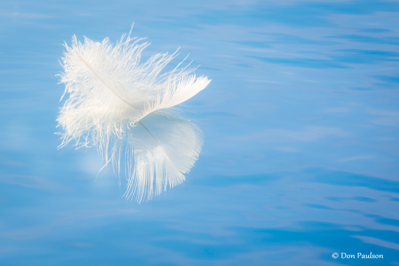 Feather Reflection