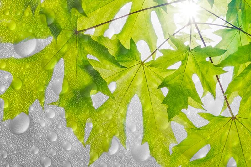 Sun-Water-Life