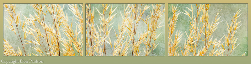Golden Grasses (suggested arrangement)