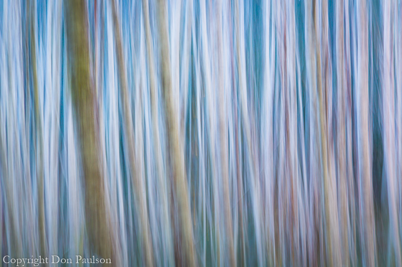 Winter forest abstract