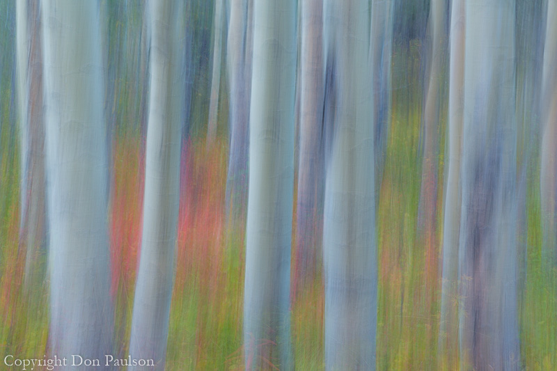 Abstract motion blur of aspen trees - Canada, Yukon Territory, Kluane National Park, Kathleen Lake