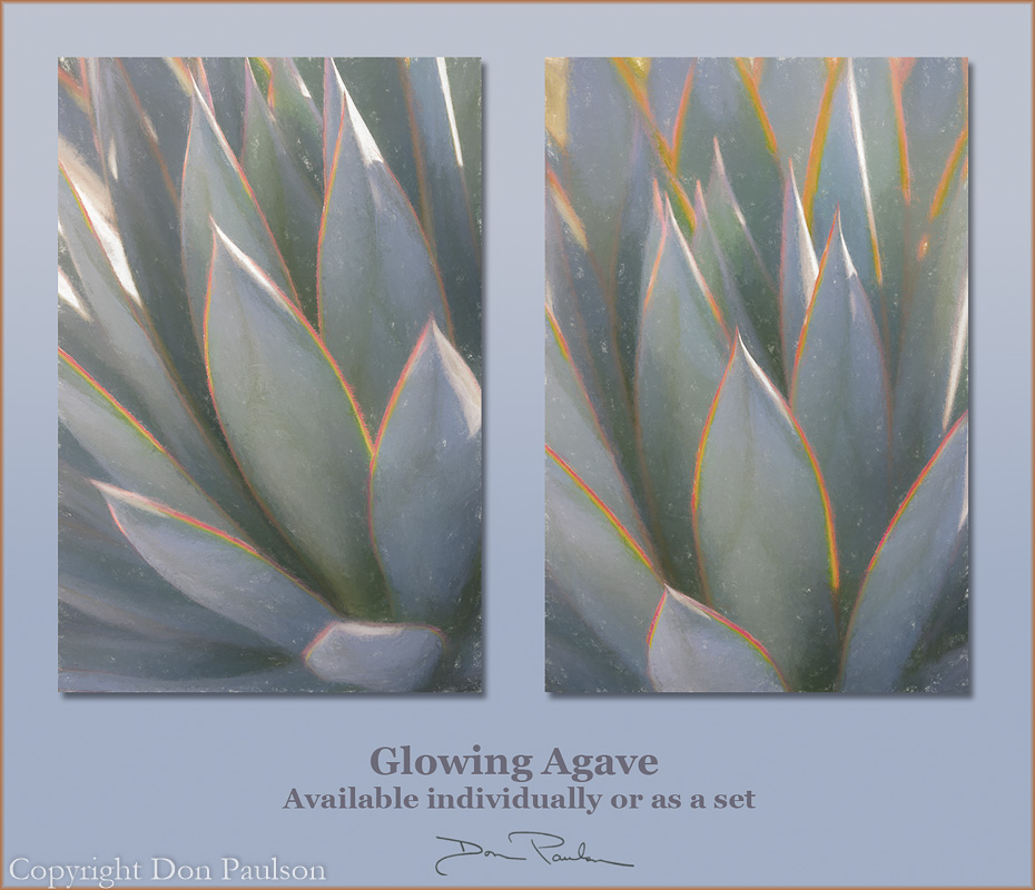 Glowing Agave