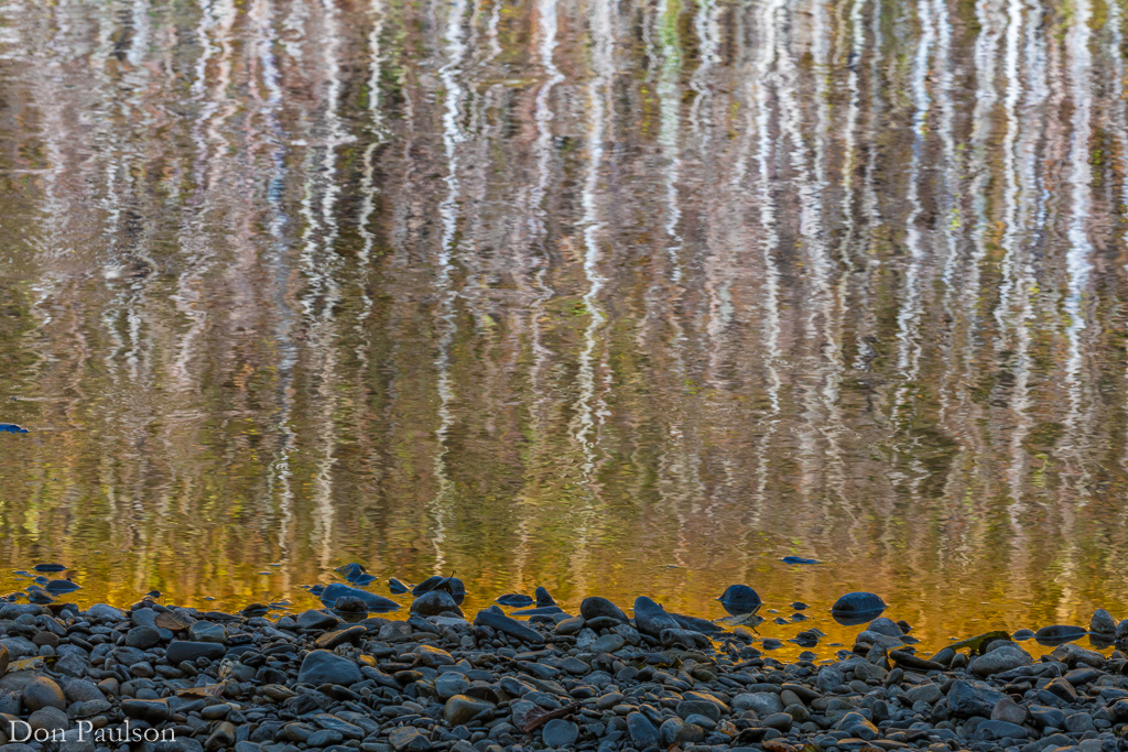 Abstract reflection of alder trees in the Quinault River