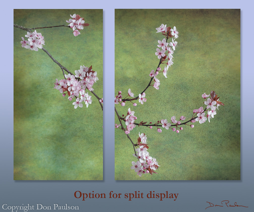 Flowering Plum (split display option)