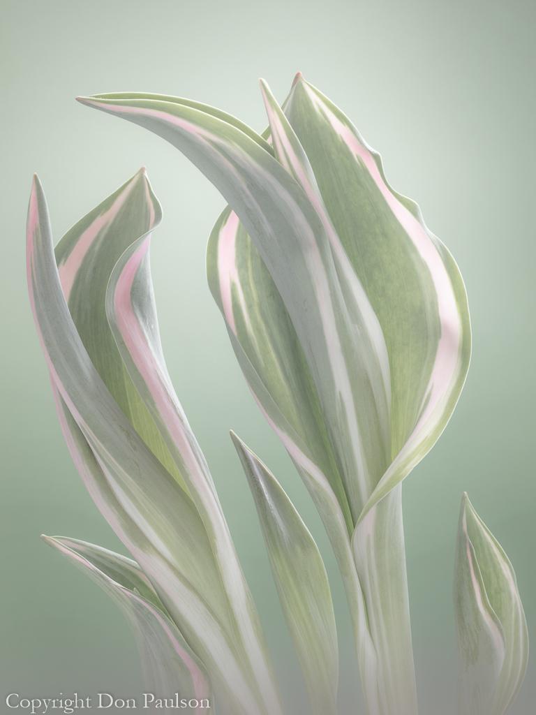 Pale Green Beginning#2