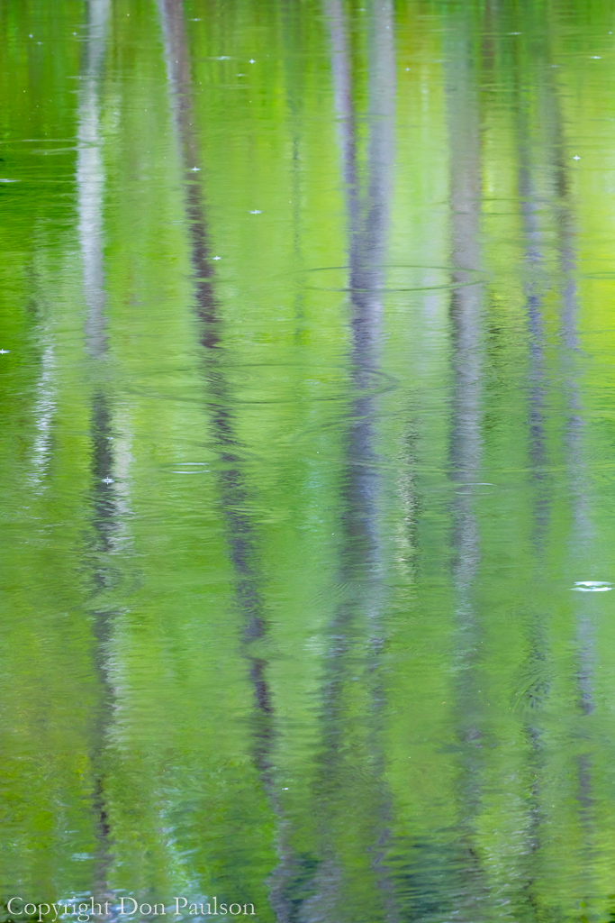 Reflections of a Rainy Day #1