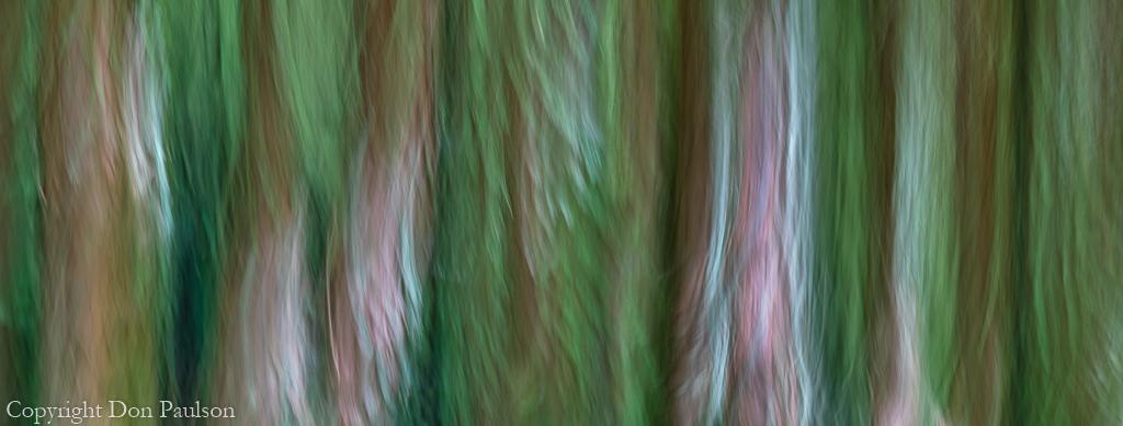 Fantasy Forest #5