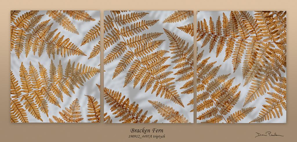 Bracken Ferns