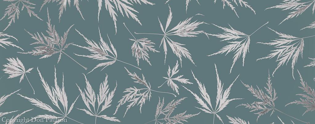 Lace Leaf Maple Leaves - 2