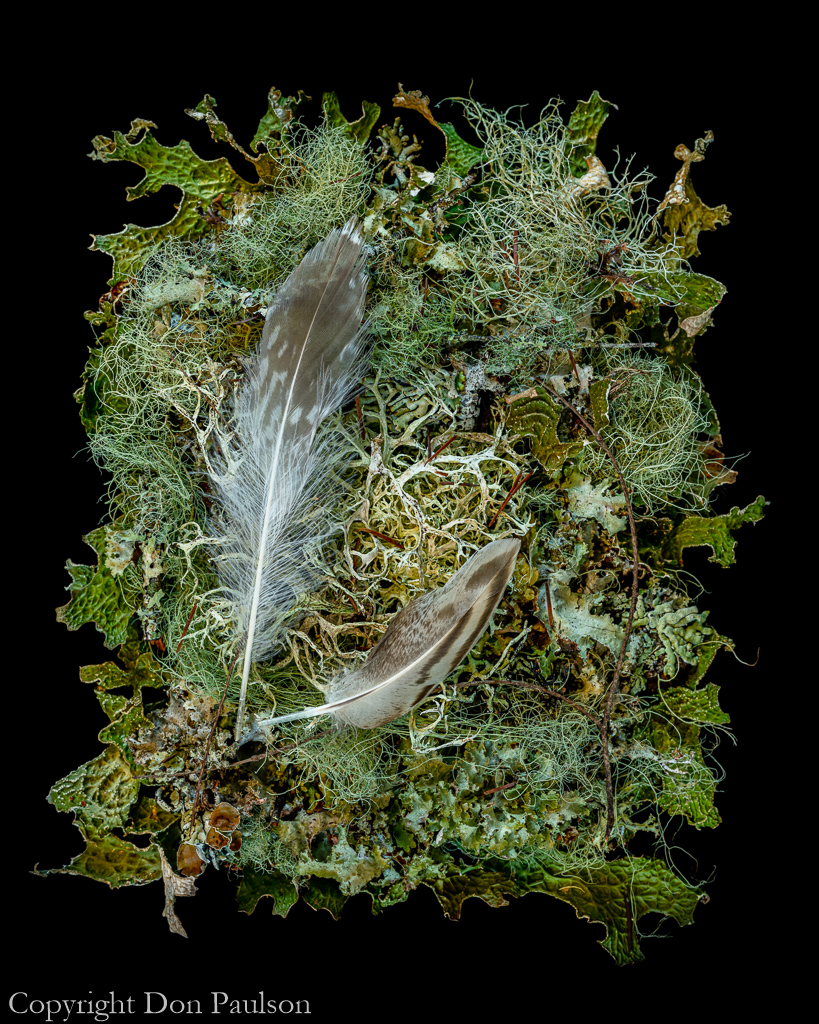 Lichens and Feathers