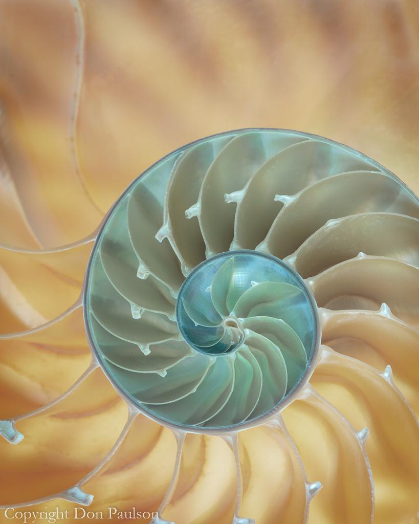 Nautilus #4