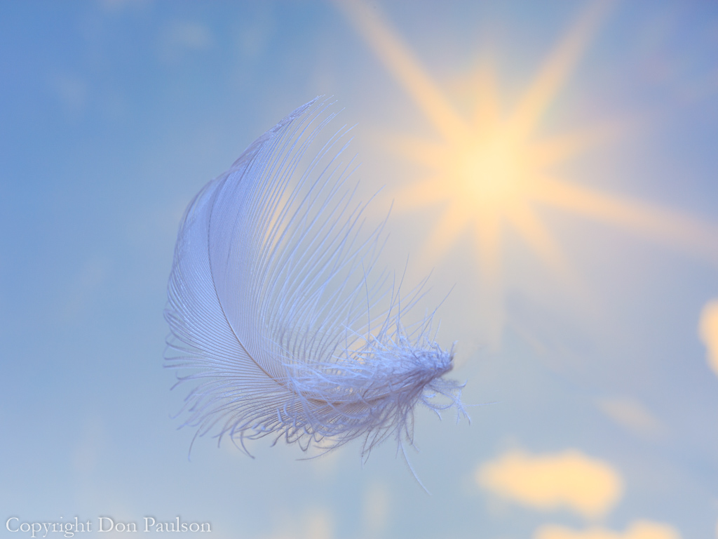 Falling Feather -2