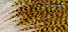 Feathers - High resolution, multi-image panorama 11666px x 5532px