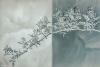 Wild Roses - (50.6 mega pixels)