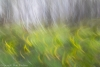 Meadow and Alders in Motion