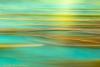 Kelp in Motion