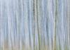 Alder Grove in Winter