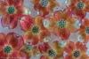 Dogwood Blossoms  #5458