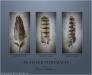 Feather Portraits Triptych
