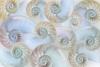 Nautilus Pattern