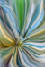 Agave Abstract