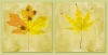Autumn Leaf Print Set, A set of 2 square images