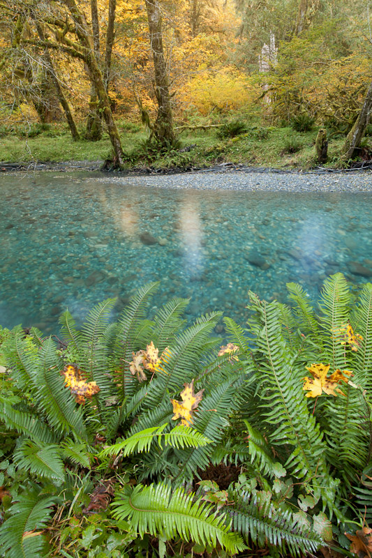 Quinault River, Olympic National Park