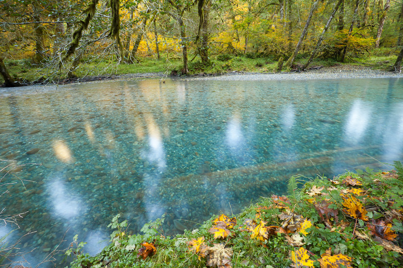 Quinault River in the Fall, Olympic National Park
