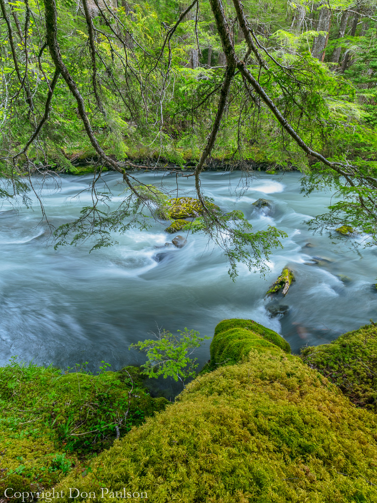 Dungeness River - Olympic National Forest