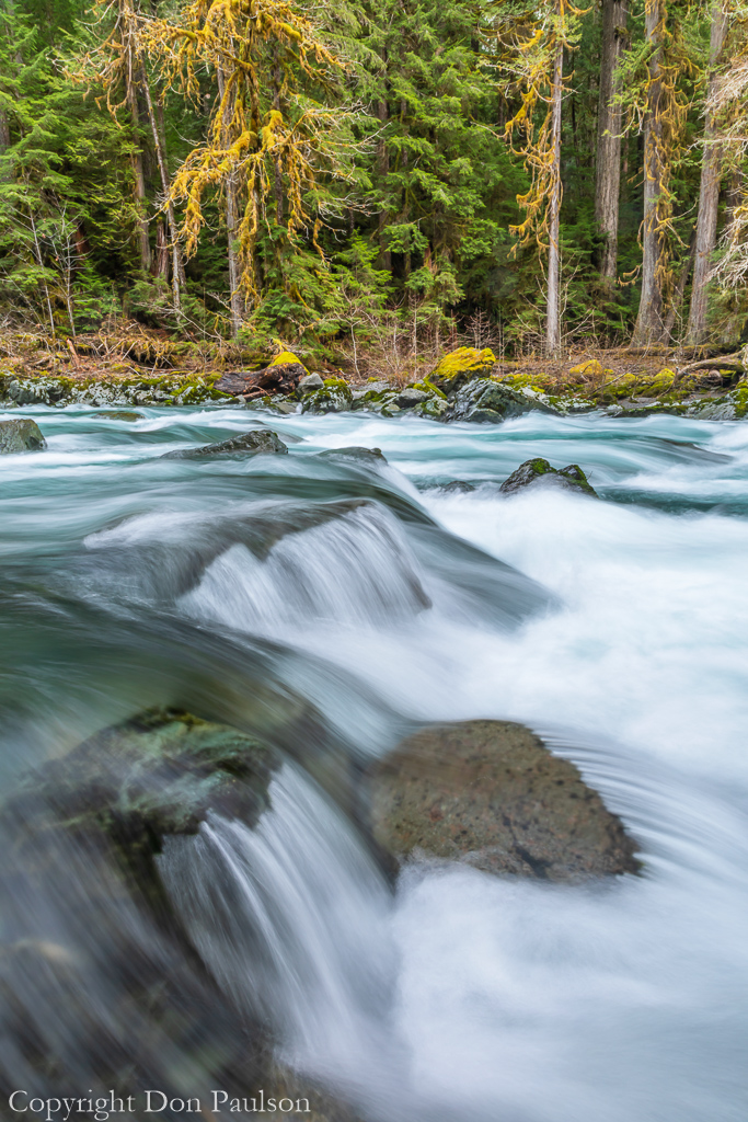 North Fork Skokomish River #2317