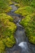 Moss -lined rivulet - Alaska, Hatcher Pass area, Upper Willow Creek