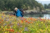Photographing, Wildflowers at Yellow Island