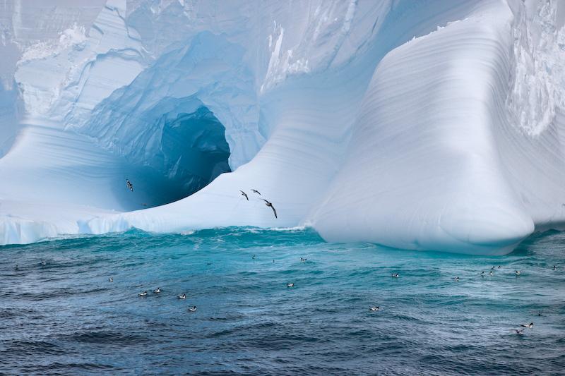 UK; South Georgia Island; Iceberg; Cape Petrels