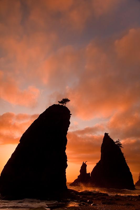 Olympic National Park; Rialto Beach Sea Stacks at Sunset