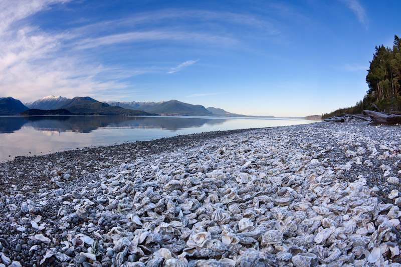 Oysters on Beach -Hood Canal, Seabeck, Washington