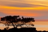 Pine Tree and Sunset, Torrey Pines State Natural Reserve and State Beach, near La Jolla, California