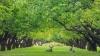 Deer in historic orchard - Utah, Capitol Reef National Park, Historic Fruita area
