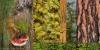 Northwest Forest Collage