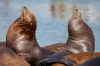 Oregon; Charleston Harbor; sea lions