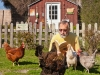 Man reading to Chickens, Olema California