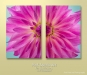 Pink Dahlia Set. Each image photographed at 50.6 Megapixel