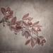 cymbidium orchid spray #4869