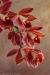 Cymbidium orchid spray #4922